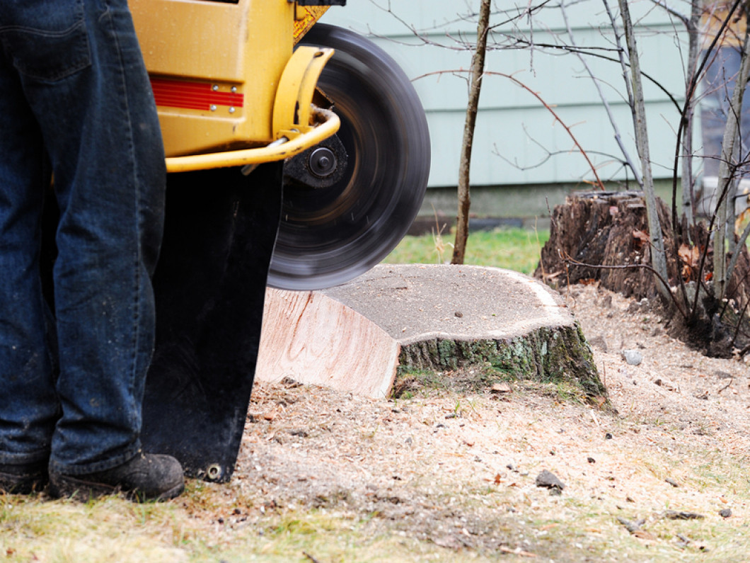 Stump Grinding in Shreveport & Bossier City, LA