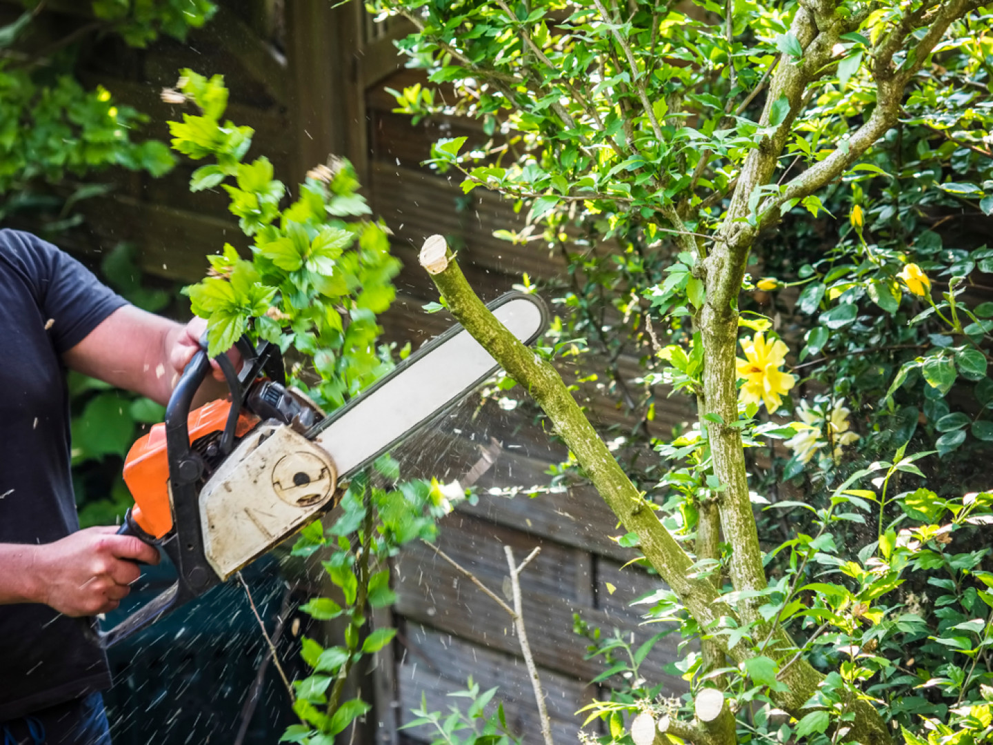 HELP YOUR TREES LOOK AND GROW THEIR BEST WITH TREE PRUNING SERVICES IN SHREVEPORT & BOSSIER CITY, LA