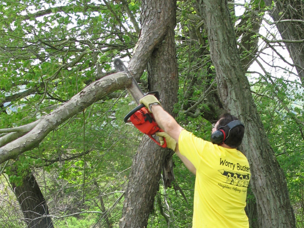 Hire a Tree Pruning Expert today!